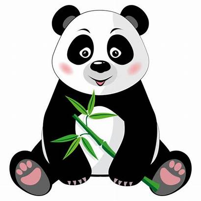 Panda Vector Giant Clip Bamboo Sitting Background