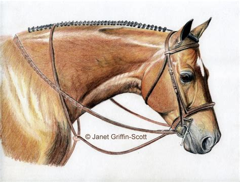 Colored Pencil Horse Drawings