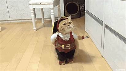 Cat Halloween Pirate Adorable Costume Ready His