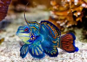Most Exotic Saltwater Fish