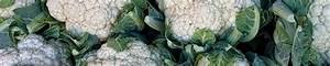 Blumenkohl Pflanzen Abstand : gartentipps f r das ganze jahr die parzelle ~ Whattoseeinmadrid.com Haus und Dekorationen