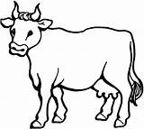Coloring Cows Pages sketch template