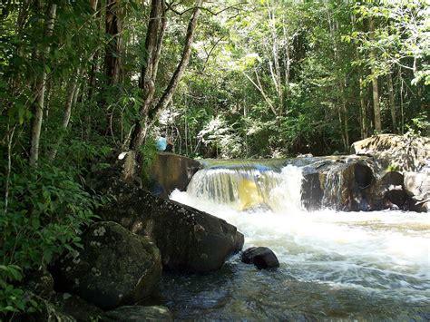 Guianan moist forests - Wikipedia