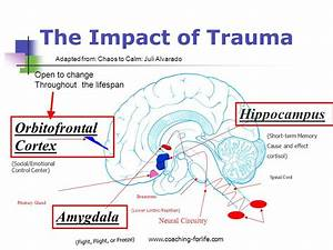Wired To Connect  How The Emotional Brain And Trauma  Part