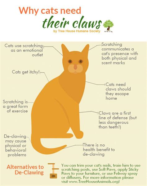 cat cats declaw nails declawing claws don why need many infographic vet reasons procedure cut claw needs scratching they declawed