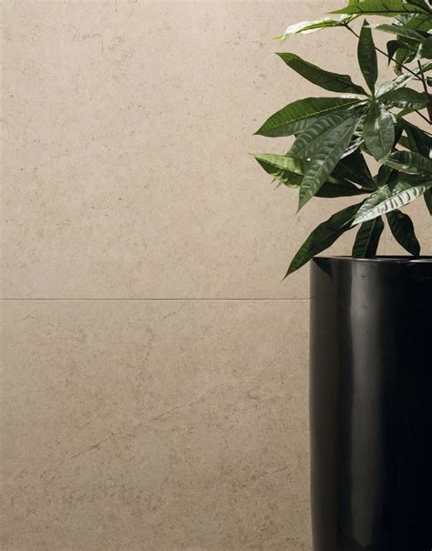 Shell Tile Imports by Brady Tile Imports Buxstone Shell Rectified 60 215 60