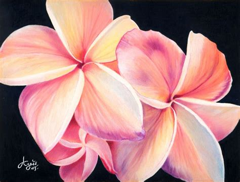 Coloring Flowers With Colored Pencils by Plumeria Flowers X Posted On Colored Pencil Wetcanvas
