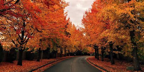 fall foliage prediction map  leaves  change