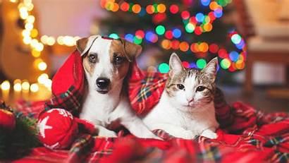 Holiday Tips Dog Happy Cat Pets Pet