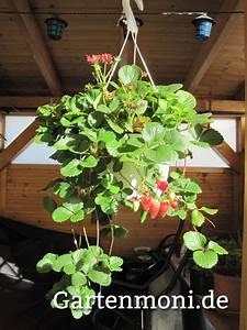 Gemüse Auf Dem Balkon : gem se und obst auf dem balkon ziehen gartenmoni altes ~ Lizthompson.info Haus und Dekorationen