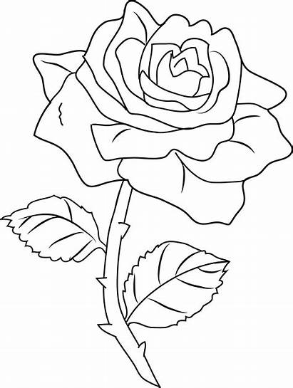 Rose Coloring Clip Pretty Line Sweetclipart