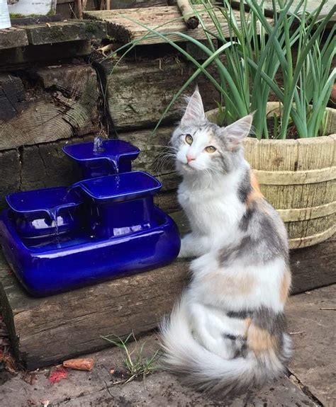 Trinkbrunnen Für Katze