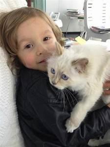 Choupette Chat Karl : choupette lagerfeld dans grazia uk les nouvelles photos du chat de karl projet karel ~ Medecine-chirurgie-esthetiques.com Avis de Voitures
