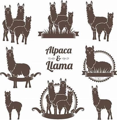 Alpaca Vector Llamas Llama Clip Emblems Illustration