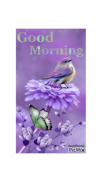 Morning Bird Purple Flowers Afternoon Gifs Picmix