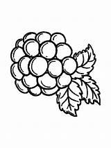 Coloring Blackberry Berries Cabbage Fruits Ausmalbilder Brombeere Printable Template Colouring Malvorlagen Kostenlos Ausdrucken Zum sketch template