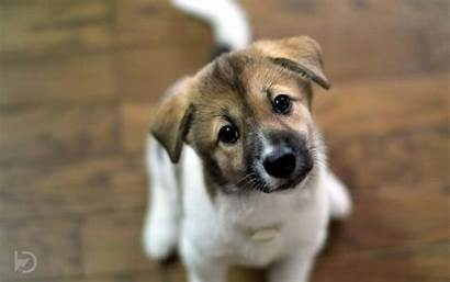 Puppy Puppies Dogs Wallpapers Wallpapersafari