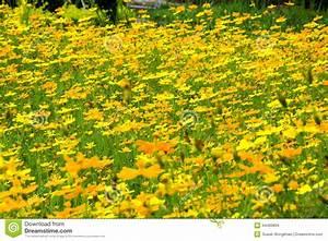 Gelbe Sommerblumen Mehrjährig : gelbe sommerblumen stockfoto bild von nadel blume fields 44483894 ~ Frokenaadalensverden.com Haus und Dekorationen