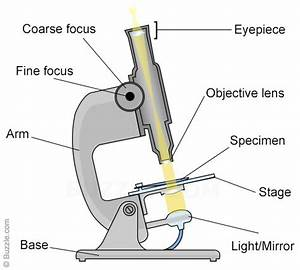 Polarizing Light Micrscope Diagram