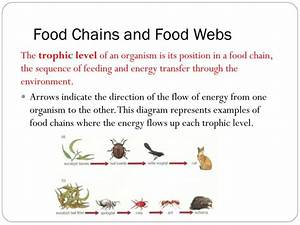 Ppt - Unit  A Local Ecosystem Topic 6   Trophic Interactions Powerpoint Presentation