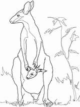 Australian Kangaroo Animal Coloring Template Wallaby Templates Colouring Pages Outline Rock Animals Drawing Baby Crafts Drawings Australia Shapes Printable Mother sketch template