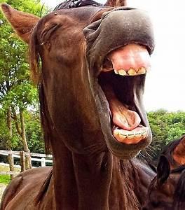 Common Horse Teeth Problem