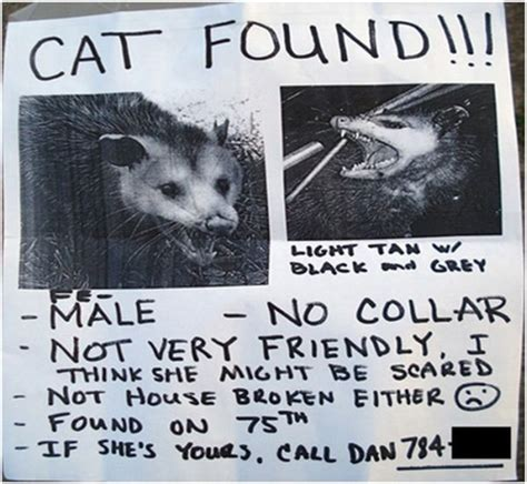 30 Funniest Lost And Found Pet Signs  Damn Cool Pictures