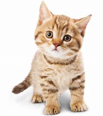 Gattino Casa Arriva Cosa Quando Come Prepararsi