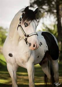 }{ blue eyed paint horse | Horses | Pinterest | Color ...