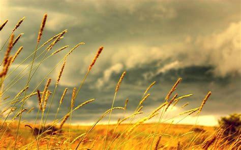 Wind Images Hd  Hd Desktop Wallpapers  4k Hd