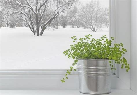 Indoor Windowsill Flowers by Easy Flowers To Grow Indoors A Useful Guide For Indoor