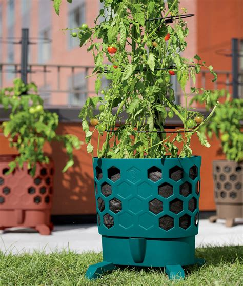 tomato planter gardener s revolution self watering tomato planter with support rings the green head