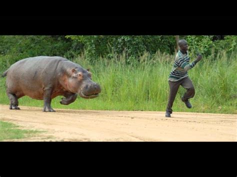 Man Gets Killed By Hippo!