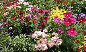 Sommerblumen Für Schatten : sommerblumen ~ Michelbontemps.com Haus und Dekorationen