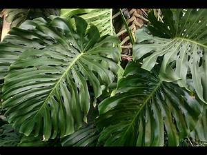 Grande Plante Verte : nettoyer ses plantes vertes mode d 39 emploi ~ Premium-room.com Idées de Décoration