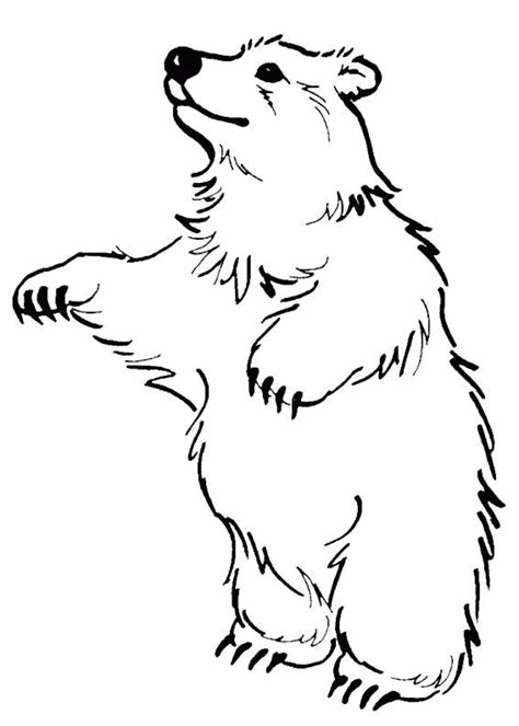 disegni  orsi da colorare pagine da colorare