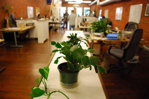 plante pour le bureau apportez des plantes au bureau pour être heureux au travail