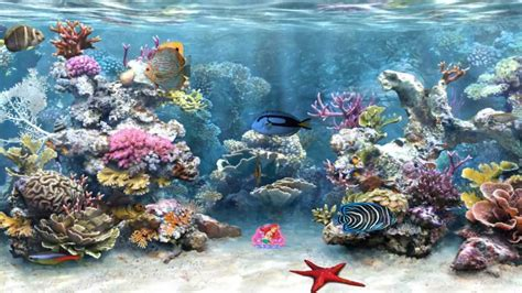 Aquarium Wallpaper Animated Free - clear aquarium animated wallpaper http www