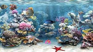 Clear Aquarium Animated Wallpaper http://www ...
