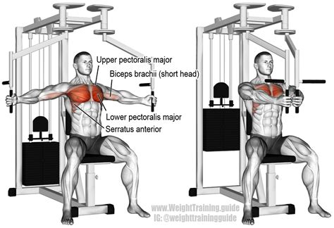 machine fly an isolation push exercise muscles worked lower pectoralis major
