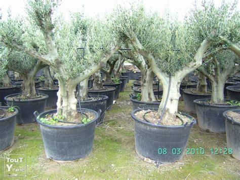 olivier pas cher olivier sur enperdresonlapin