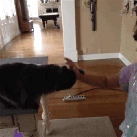 bad cat caught   act  bathroom destruction
