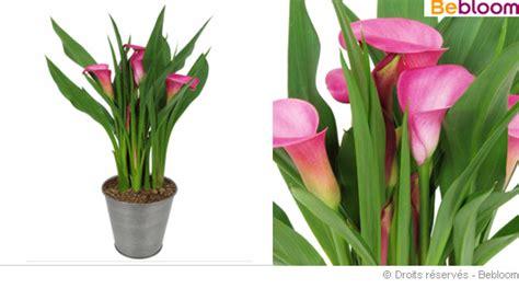 plante d interieur fleurie plante fleurie int 233 rieur photos de magnolisafleur