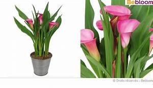 Entretien Plante Verte : plante d interieur fleurie photos de magnolisafleur ~ Medecine-chirurgie-esthetiques.com Avis de Voitures