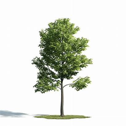Evermotion Trees Poly Low Realistic Archmodels Render