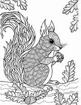 Colouring Sheets Squirrels Veverka Omalovánky Coloringbay Mycoloring Coloriages Eckersleys Rodent sketch template