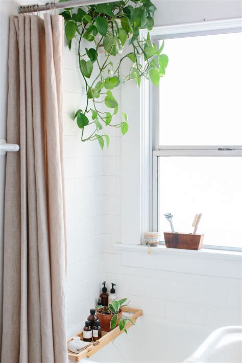 shower plants 7 easy bathroom updates you can do this weekend stylecaster