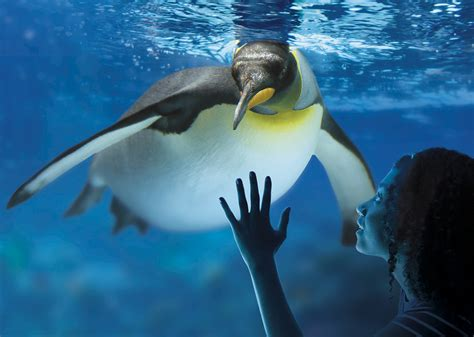 aquarium sea parcs de loisirs ile de