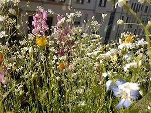 Welche Blumen Kann Man Essen : fotoserie bienenfreundliche pflanzen koleo umwelt und ~ Watch28wear.com Haus und Dekorationen