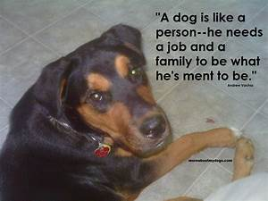Quotes About Dogs Loyalty. QuotesGram